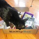 KitNipBox Reviews 2020